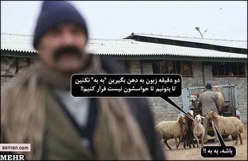 تصاویر طنز عیدسعید قربان(طرفا جهت طنز)